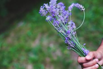 21 Acres_lavender